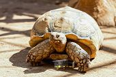 picture of tortoise  - Turtle or tortoise on ground with food box in zoo - JPG