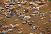 picture of shells  - different shells - JPG