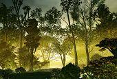 foto of vegetation  - 3D illustration of a wood landscape with vast vegetation in an atmosphere greenish - JPG