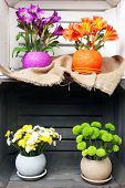 picture of wooden crate  - Beautiful flowers in pots in wooden crate - JPG