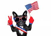 picture of bulldog  - french bulldog waving a flag of usa on independence day on 4th of july isolated on white background victory or peace fingers - JPG