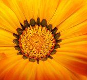 Vivid Yellow Flower 001