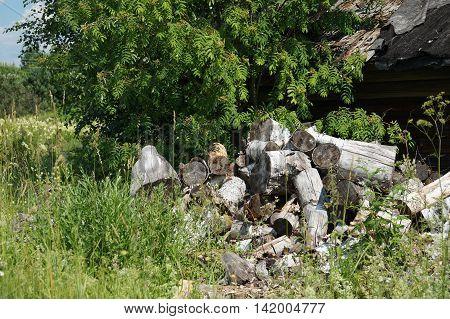 Logs Were Dumped In The Green Grass