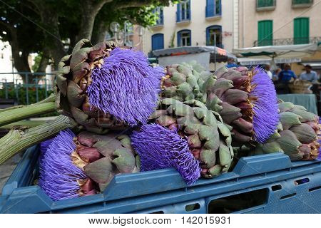 Big Flower Artichoke at the market in France - decor flora