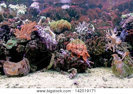 Marine coral and fish in the aquarium