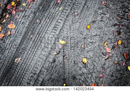 elevated view of autumn leaves on dirt road in forest