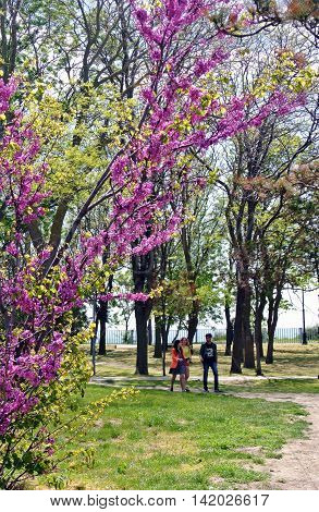 ANAPA, RUSSIA - MAY 02, 2016: Three young men on background walking in lush park on seaside promenade resort town Anapa, soft focus