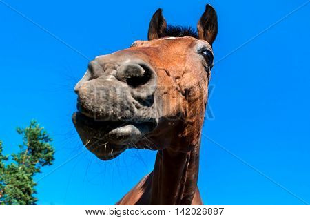 Beautiful Horse head on blue sky background