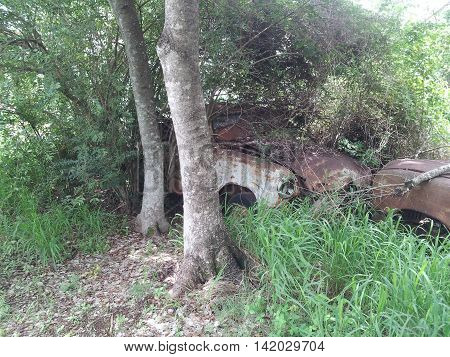 Two Old Cars Overgrown And Rusting Away