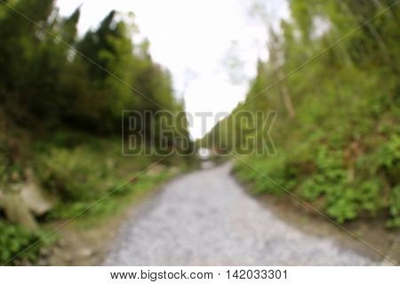 Footpath in picturesque Carpathian forest, unfocused