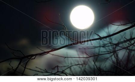 Beatiful night and big full moon in halloween.