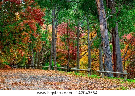 Colourful autumn trees in Adelaide Hills South Australia