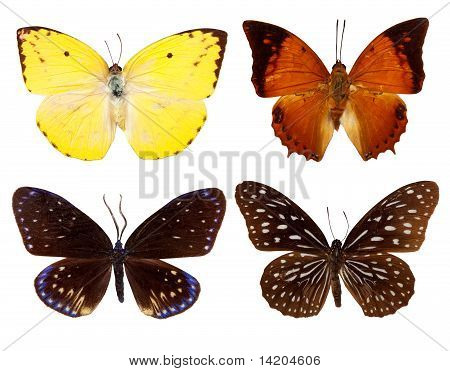 Set Of Exotic Butterfly
