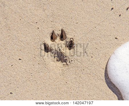 Dog pawprint at the beach. Sand and surf.