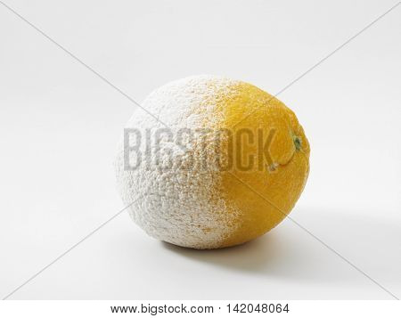 rotten orange on white background
