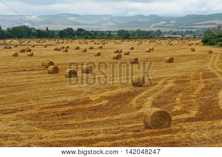 Field with beveled and wheat straw in round stacks and mountains on the background