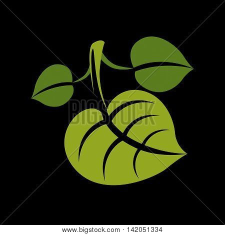Three simple green vector leaves of deciduous tree stylized nature element.