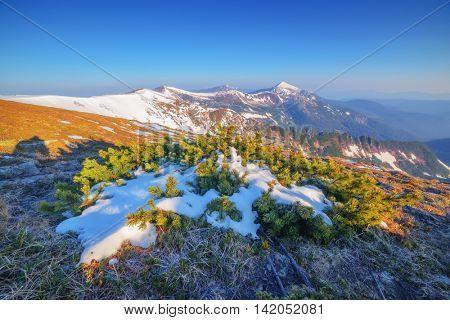 Carpathians mountain in spring time