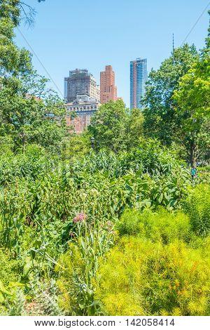 Vegetation in Battery Park, New York