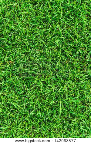 Beautiful Botany Green Grass In Garden