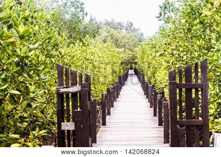 Wooden Trail Walkway Mangroves Tree Or Shrub That Grows In Chiefly Tropical Coastal Swamps That Are Flooded At High Tide In Prasae Rayong Province Thailand.