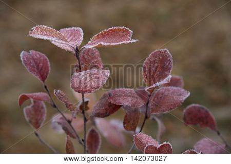 Branch With Frosted Leaves Swaying in the Wind