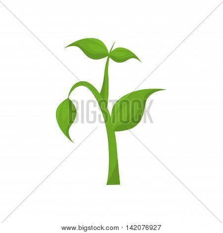 plant green leaf ecology leaves growing silhouette vector graphic isolated and flat illustration