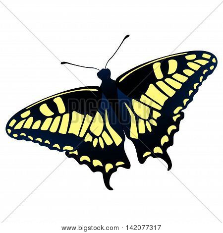 Old World swallowtail - Papilio machaon - butterfly vector illustration