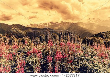 Flowers meadow in mountains and sky, vintage landscape
