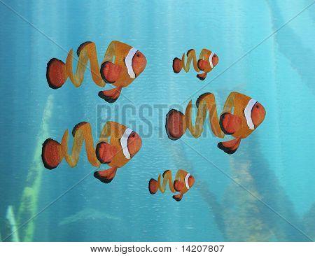 Orange peel clown fish