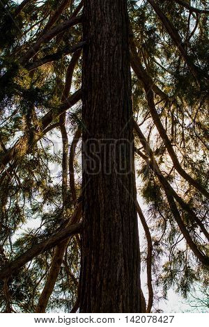 Dramatic Contrast Daylight Tree Trunk Tall Abstract Silhouette