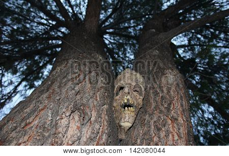Creepy Halloween Mask Peeking Between the Trees