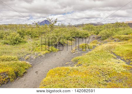 Green grass and trekking path in Myvatn area - Iceland.