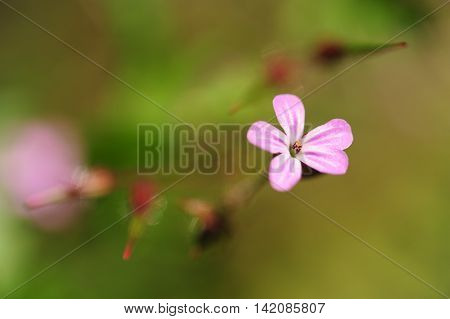 Detail of purple flowering plant on a blurred background