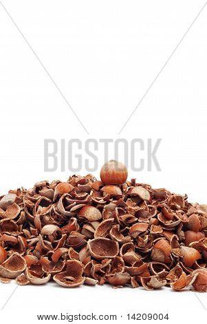 whole hazelnut on top of cracked shells