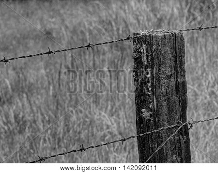 Rustic Fence Post and Barbed Wire in Black and White