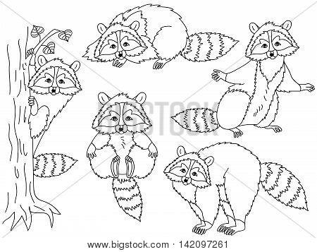 Black and white vector cute raccoon set