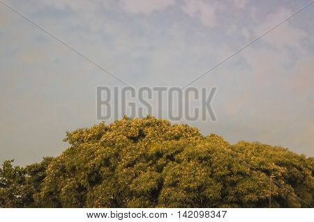Low angle view of leafy tree against blue cloudy sky background