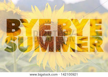 Bye Bye Summer word on sunflower background
