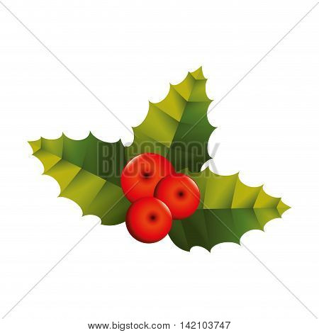 decoration christmas plant leaf european berry december vector graphic isolated and flat illustration