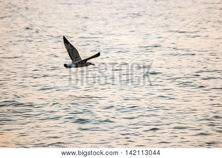 Soaring seagull over sea surface, a lot of copyspace