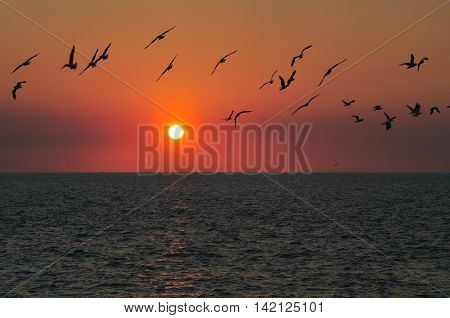 Seagulls in the Sunset over the sea at Nightcliffe Darwin