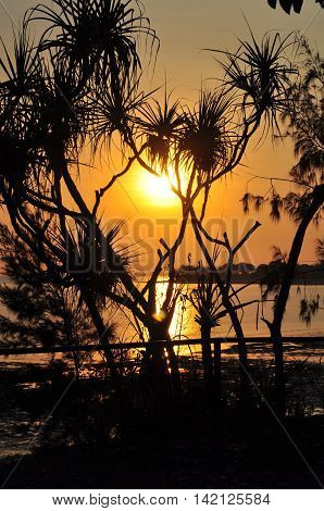 Sunset over Mindil Beach Darwin with Pandanus Trees foreground