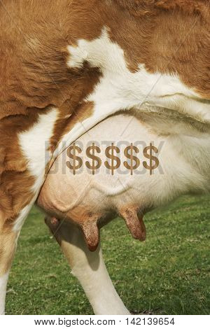 Extreme closeup of brown cow's udder with dollar symbol