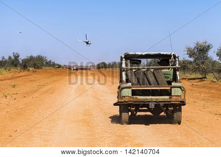 Cattle mustering on cattle station road, Pilbara, Western Australia