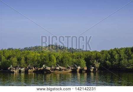 mangrove forest and abandon fishing boats with blue sky