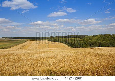 Yorkshire Barley Fields