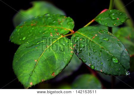 a close up of beautiful green leaves