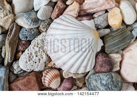 Detail of the shell on sea pebble stones
