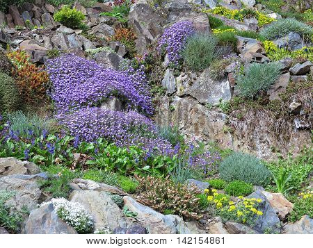 Image of the rock garden with various flowers